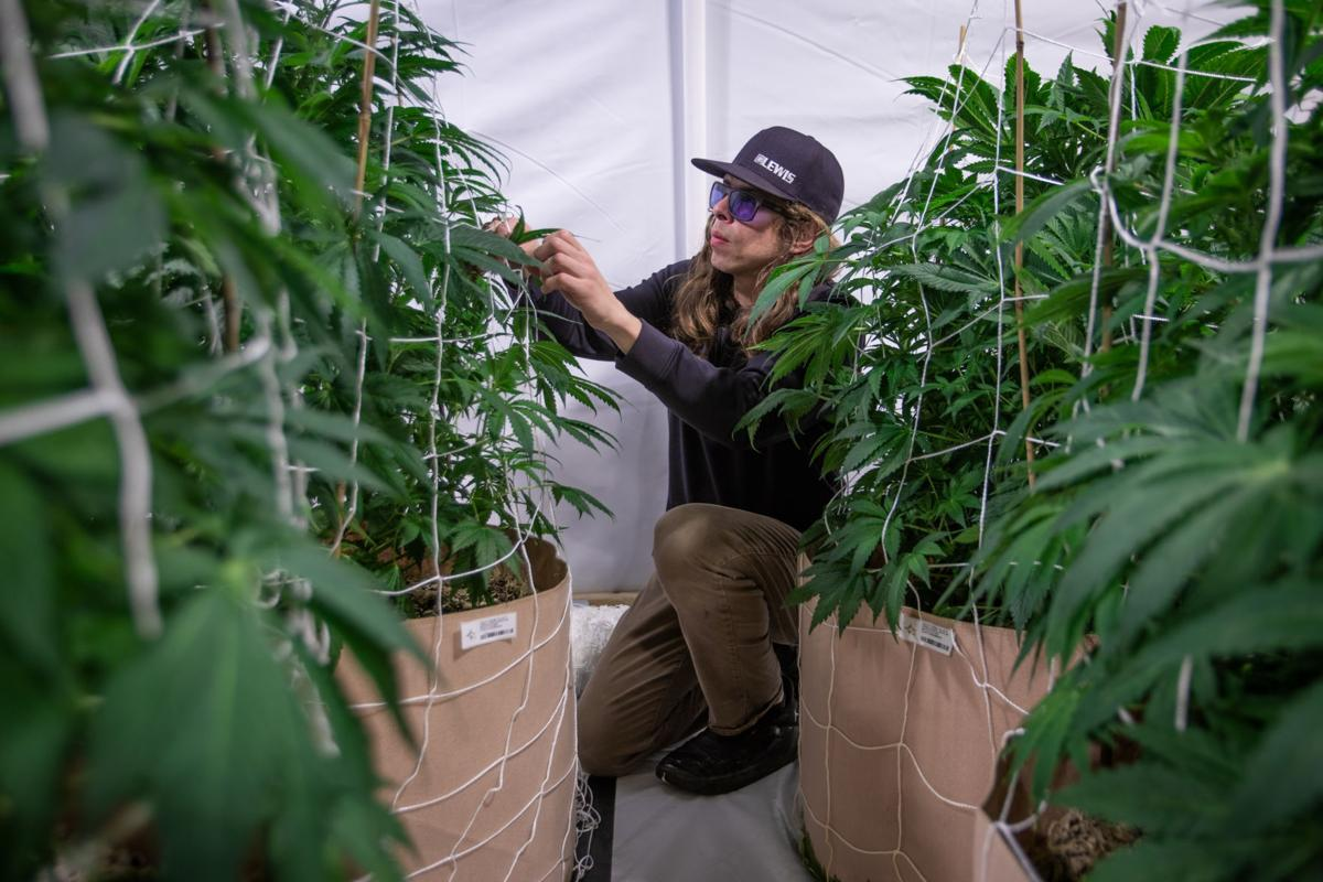 Standard-Examiner: First Cache Valley cannabis dispensary coming to North Logan